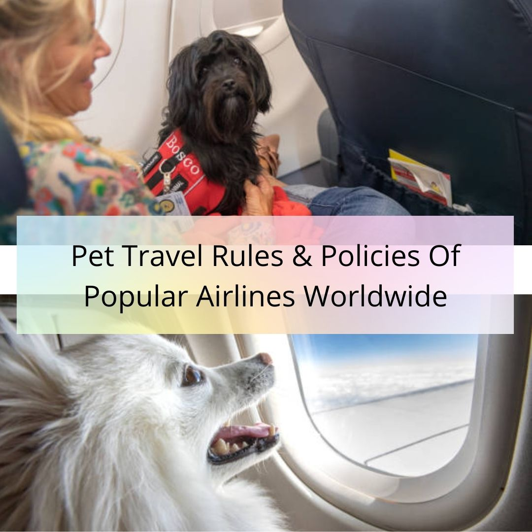 Airline Pet Policies: Travel Rules & Policies of Airlines Worldwide - TFB